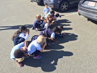 Using our binoculars to watch the chickadees under the car!