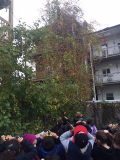 "5-""The birds are blending into the leaves and we can't see them. Predators will have a hard time trying to find and eat them."""